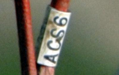 DSC5438 ring